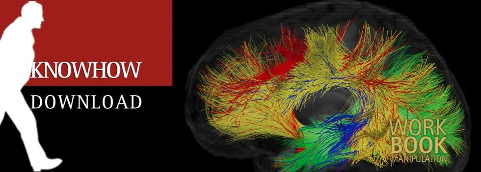 Das Gehirn – eine kurze Zusammenfassung