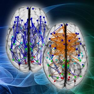 Neuronale Verdrahtung