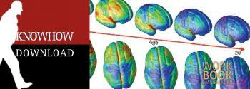 Die Entwicklung des Gehirns